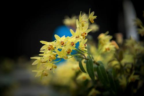 赞美铁皮石斛开花的诗