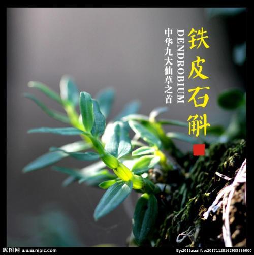 石斛和菊花
