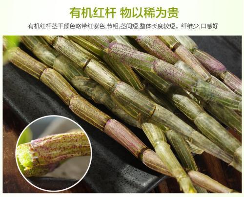 种植石斛的松树皮如何发酵