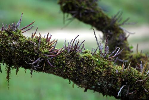 石斛栽盆里好还是栽在树皮上好
